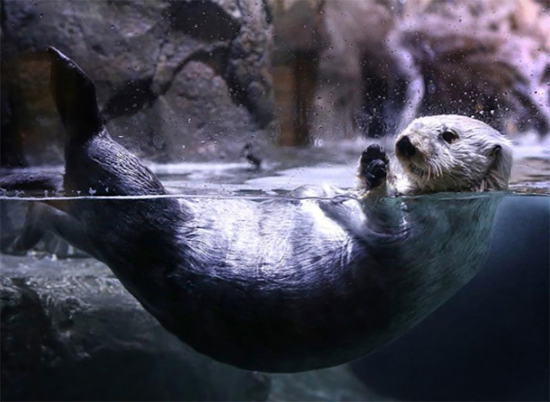 5 More Things To Do In NOLA Otter At The Auquarium