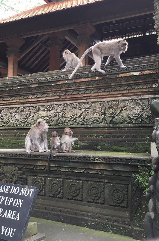 Mulia Resort And Villas Bali Indonesia The Sacred Monkey Forest