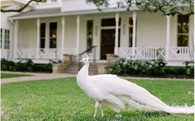 Wedding Venues with Peacocks, Alpacas, and Deer, Oh My!